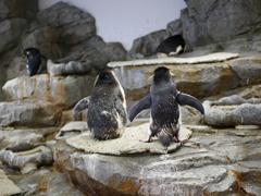 ペンギンは振り向かない