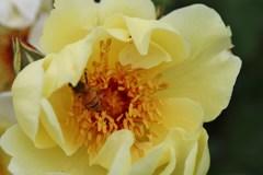 花 15 with働き蜂