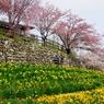 思いっきりの春