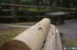 丸太のベンチ