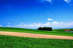 夏色の大地