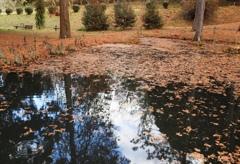 落葉の風景2