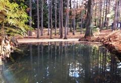 落葉の風景5