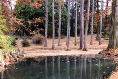 落葉の風景4