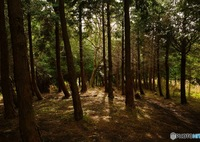 PANASONIC DMC-GX7MK2で撮影した(森)の写真(画像)