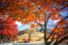 秋晴れの牧場