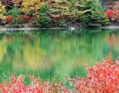 白鳥の棲む小さな湖