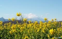 春色富士山