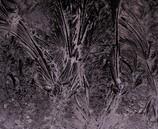 窓に咲く氷花 (2)