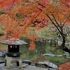 庭紅葉~旧古河庭園