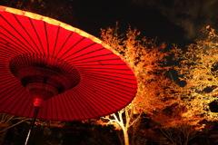 野点傘と紅葉