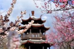 花咲くを待つ喜びを