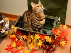「こはる」の秋模様(本年版)