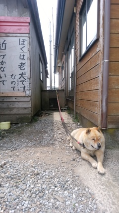 老犬注意!?