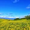 高原の春は美しい