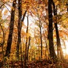 秋の夕日に…