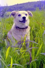 成長期の愛犬