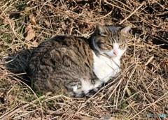 公園のネコさん。