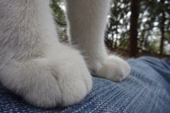 猫の足ってぷにぷにしとってどがわいいら?そう思わん?