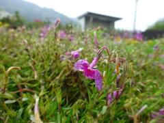 雨水滴る枯れ花