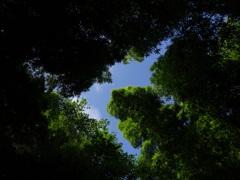 竹林に囲まれて