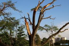 台風の爪痕Ⅰ