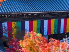 紅葉を求めて・京都永観堂②