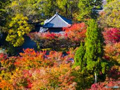 紅葉を求めて・京都永観堂①