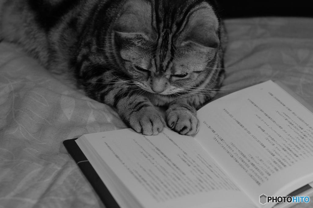 勉強の時間にゃ?