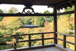 京都…今頃紅葉してんだろうなー