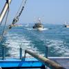 こどもの日 五月五日の 伊予漁港