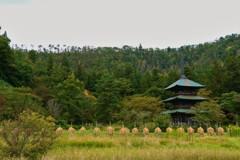お米の時期の三重塔