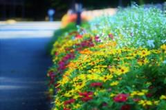 霞城公園の歩道
