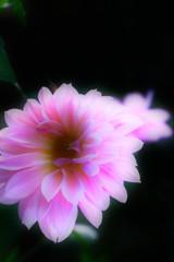 霞城公園の道端の花