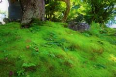 上杉神社の苔