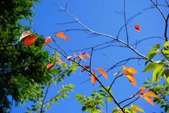 上杉神社境内の木々