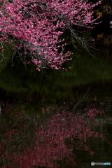 初春庭園 2