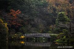 三渓園 観心橋と紅葉