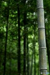 「竹」 2