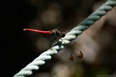 ロープの上の赤 その2