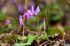 春の癒し №9 北の国から
