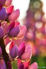 春の彩り №41 北の国から
