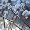 雪の花 №3 北の国から