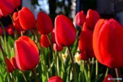 春の彩り №4 北の国から