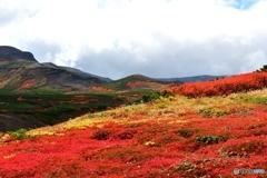 日本で最も早い紅葉 №19 北の国から