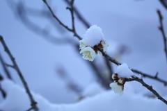 春まだ遠くⅡ