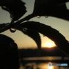 雨上がり、夕陽、漁港