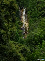緑の中の滝