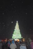 雪夜のツリー