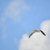 青空を飛ぶ